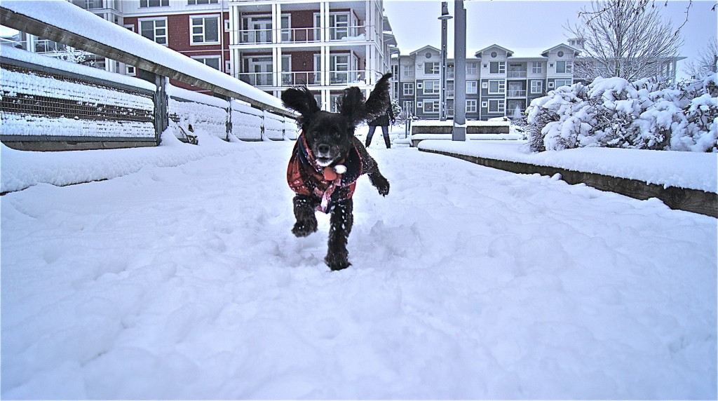 Jumping dog! - Pictures of snow on Steveston's boardwalk on Dec. 20, 2013.
